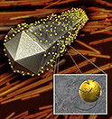 Advanced Materials illustration of nanocob