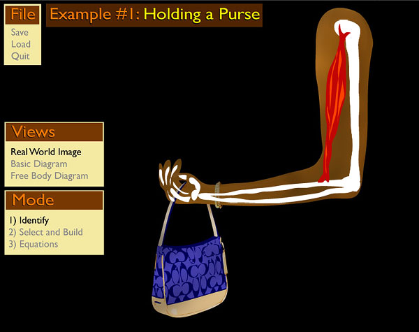 The Purse Problem: Muscle and Bones provide Basic Structure